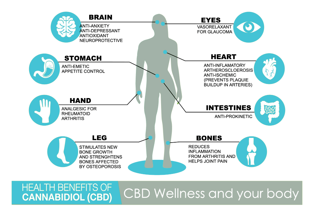 Educational, informs viewers about ECS related to CBD Oil Side Effects
