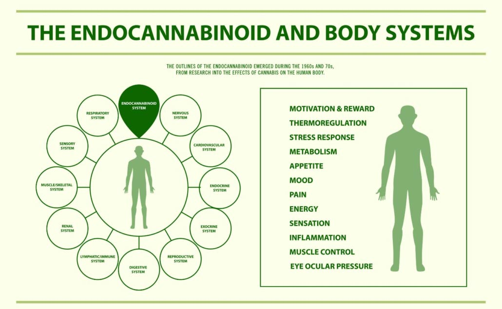 educational: re: CBD and the ECS for Spectrum cannibus.com users