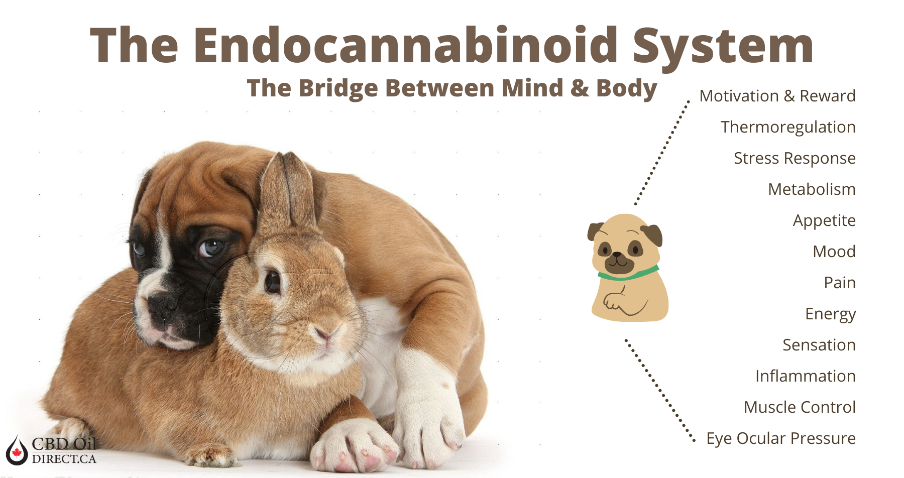 Visualizes the endocannabinoid system in animals for people buying CBD oil for Dogs