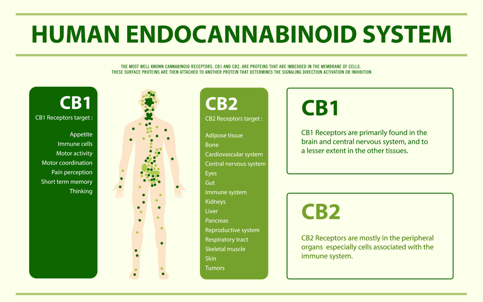 visualizes the role of the ECS, educational related to CBD oil, Canada