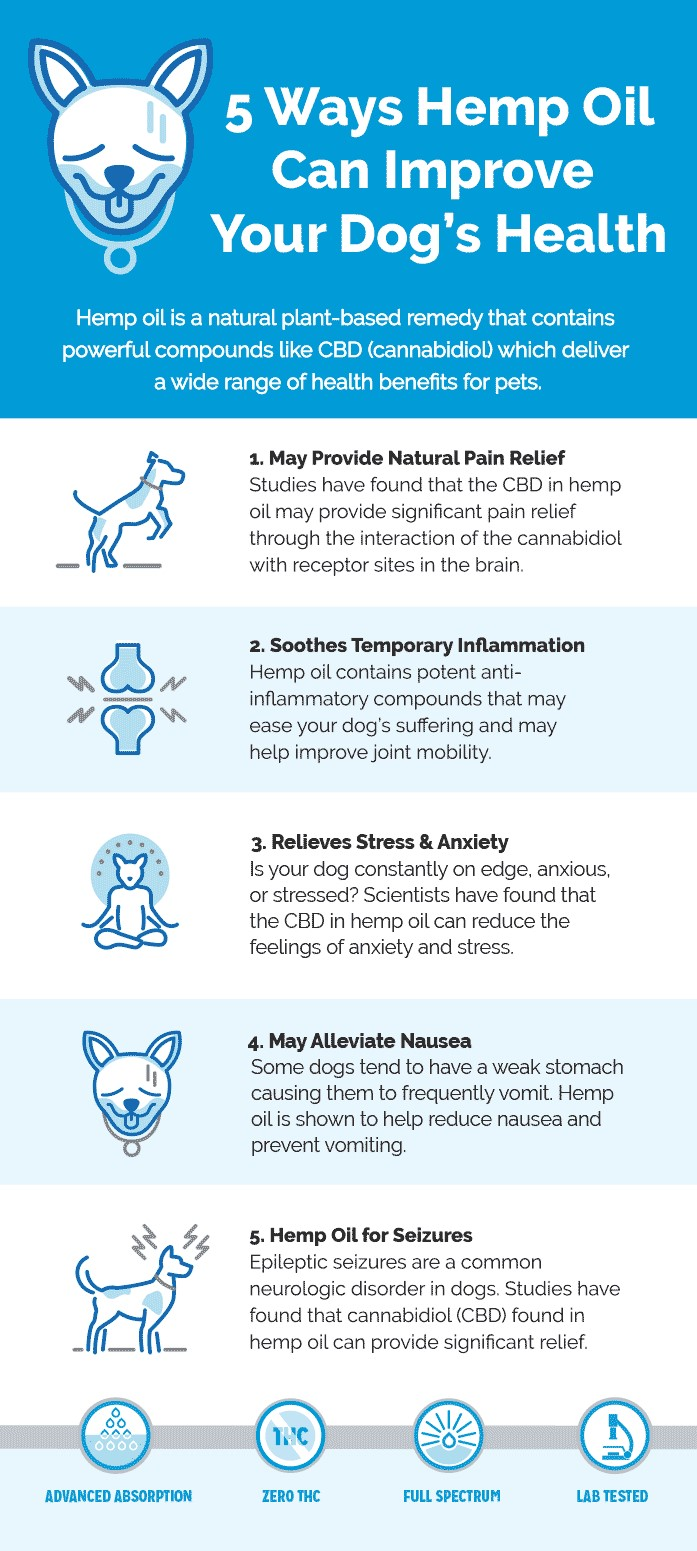 educational: benefits of cbd for dogs
