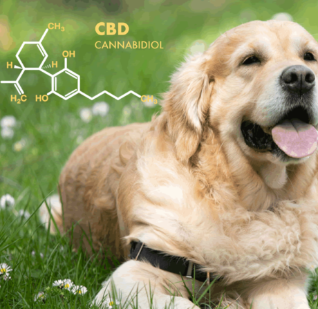 CBD Oil For Dogs: The Complete Guide