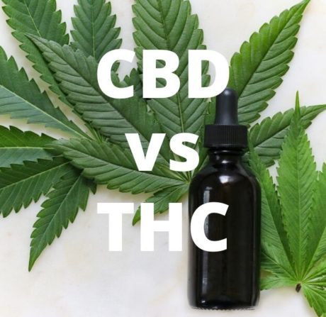 CBD vs. THC, What are the Differences, Benefits and Effects?
