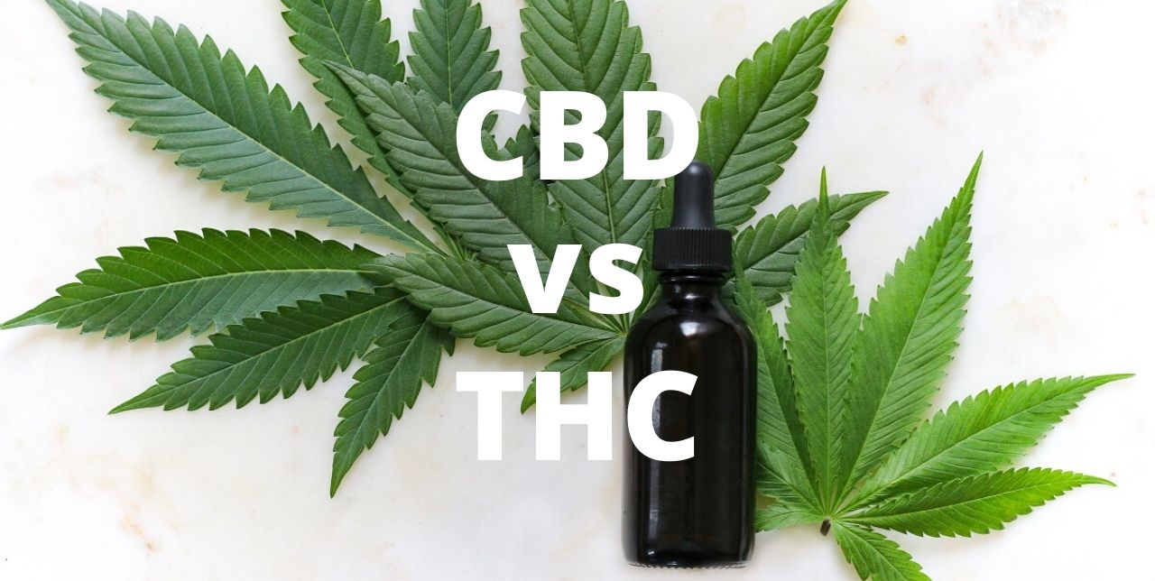 "visualizes topic ""cbd vs thc"" for reader"