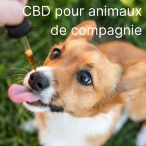 cbd pour animaux de compagnie sqdc montreal