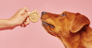 Treat with Dogs
