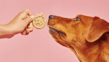dramatize dangerous dog treats
