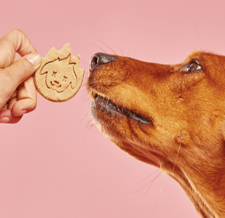 The Most Dangerous Dog Treats vs. The Best – A Handy Guide