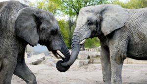 visualize warsaw zoo cbd oil experiment elephants
