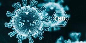 visualizes CBD vs COVID effectiveness