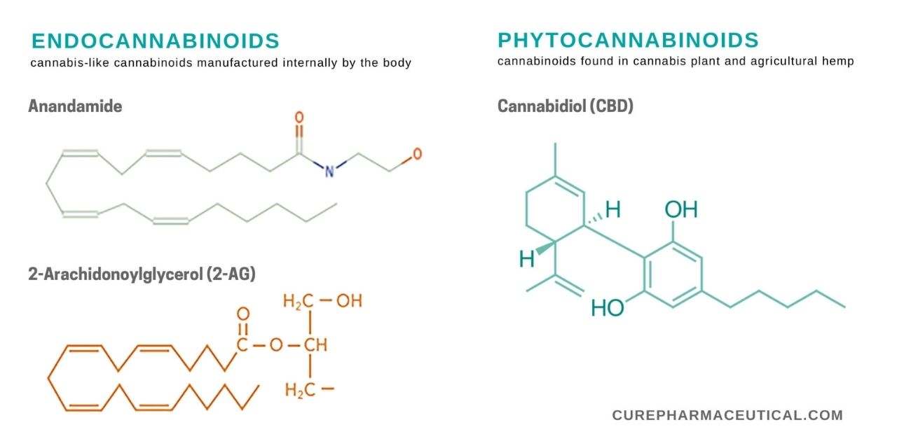 visualize different kinds of cannabinoids with diagrams of cannabinoid molecules