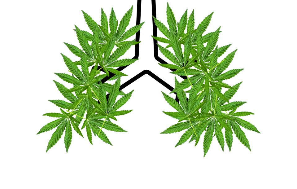decorative: metaphor for positive relationship between CBD, COVID-19 and lung health