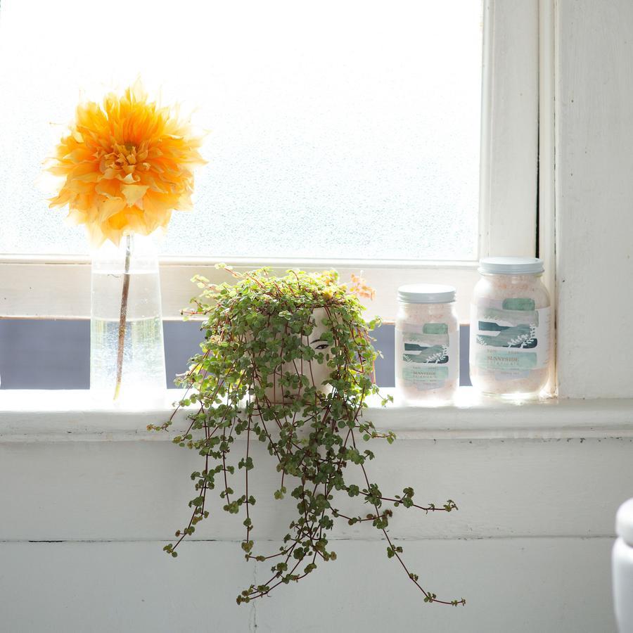 visualize placement of cbd bath soak by sunnyside botanicals