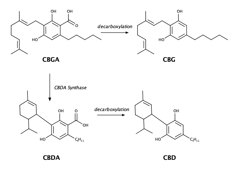 educational graphic showing the various chemical bond structures of CBG and other cannabinoids