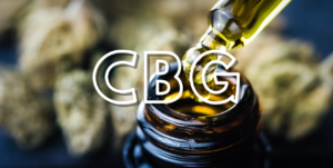 visualizes cannabis origin of CBG with cannabis flower and bottle of cannabis oil